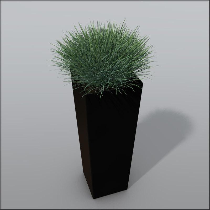 Ornamental_Grass1_variant2.jpg