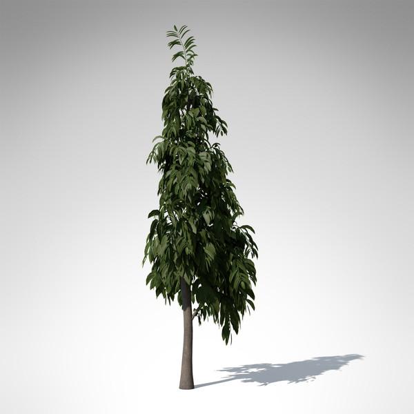 3d model ashoka tree