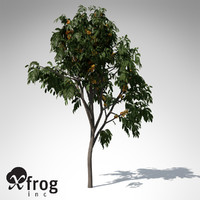 ashoka tree 3d model