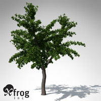 3d model tropical almond tree