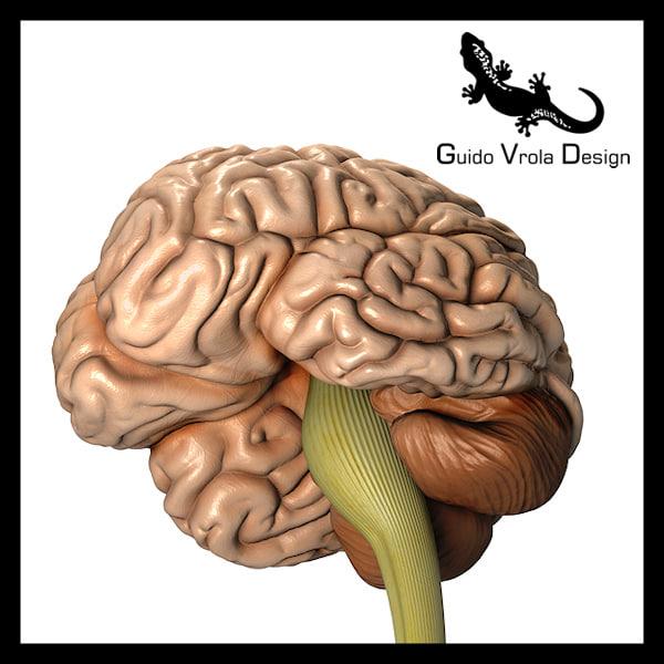 Cervello_1_Lg.jpg