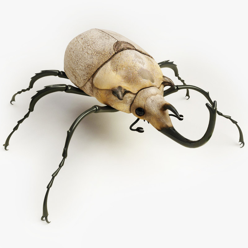Elephant_Beetle_00.jpg