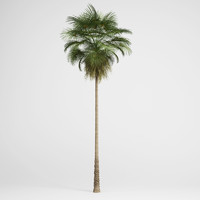 3d model mexican fan palm 10