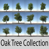 Oak Tree Collection