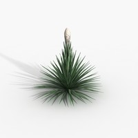 Plant Puya