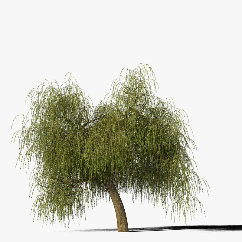 willow_typ9_render_f_0005.jpg