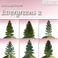 evergreen trees 2