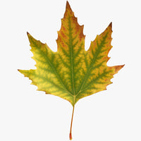 x realistic autumn maple leaf