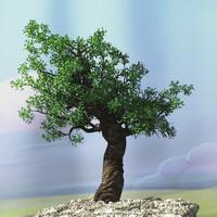 oak tree max