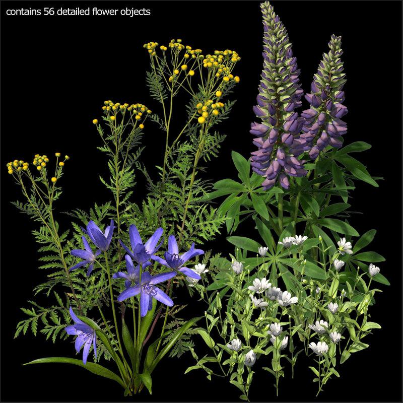 Turbo_Wildflowers.jpg