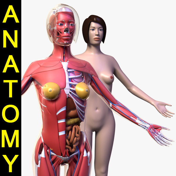 Female_Anatomy_leo3dmodels_0000.jpg