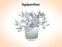 3d model agapanthus plant