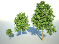 3d model trees polygons