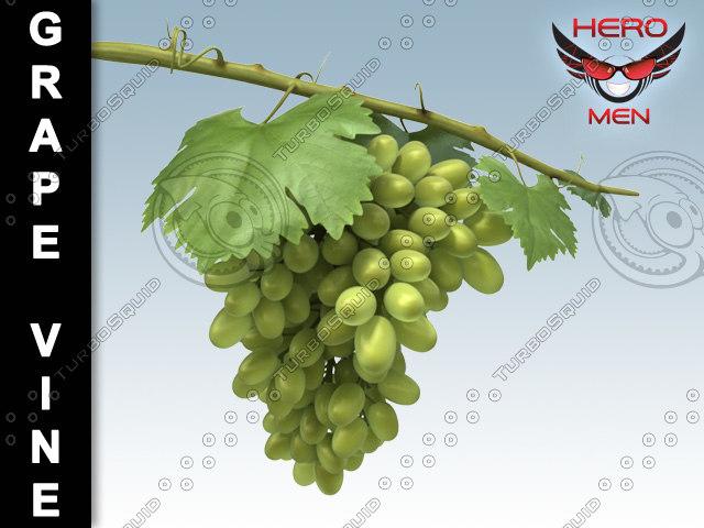 grapevine01.jpg