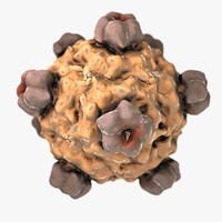 3d model virus bacteria pathogen