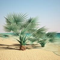 bismarckia palm 3d max