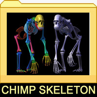 3d model chimp skeleton bones