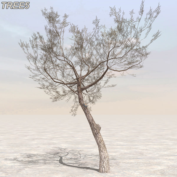 tree plants afghanistan 3d model - Afghanistan Tree Plant Pack... by 3D_Garden