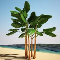 3d banana musa model