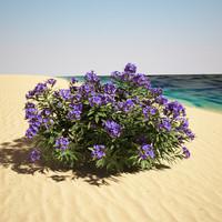 nerium oleander max