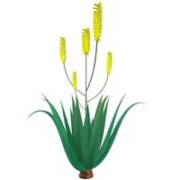 3d model aloe vera plant