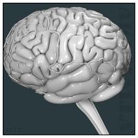 3d obj human brain