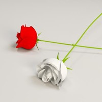 white red rose 3d obj