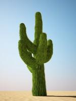 saguaro cactus obj
