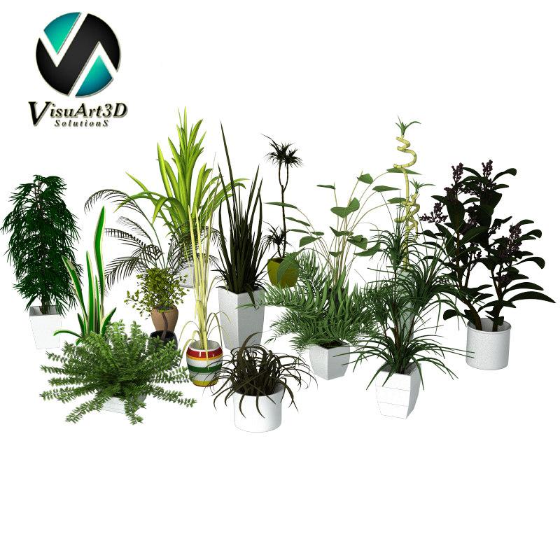 Plants Collection main.jpg