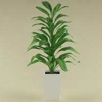 plant_43