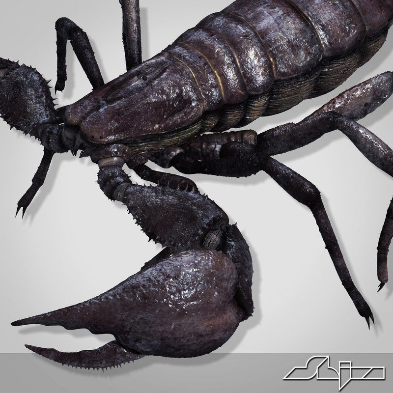ScorpionPandinusImperator_render-20.jpg