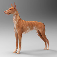 3d faraonovaja dog model