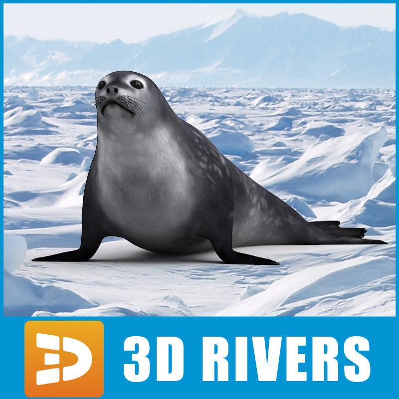 weddell_seal_logo.jpg