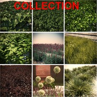 3d model ground cover 9