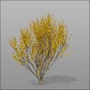 forsythia 3D models