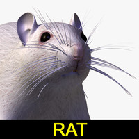3d max rat mouse animal