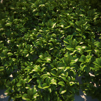 HQ-Vegetation - Ground Cover 2