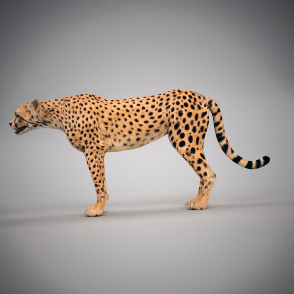 fox tiger cheetah 3d model - Animals Collection 0311... by QLEE
