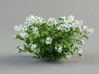 hortensia 3d model