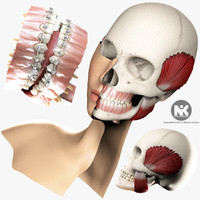 3d model orthodontics dental v4 0