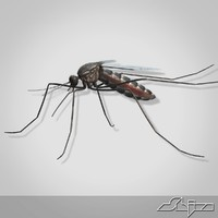 3ds max mosquito