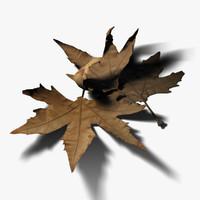 dry leaves 3d model