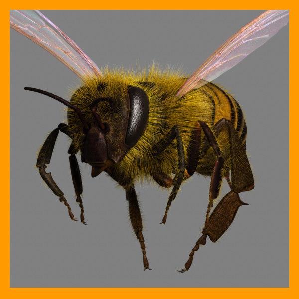 honeybee_persp0.jpg