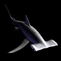 hammerhead shark 3ds