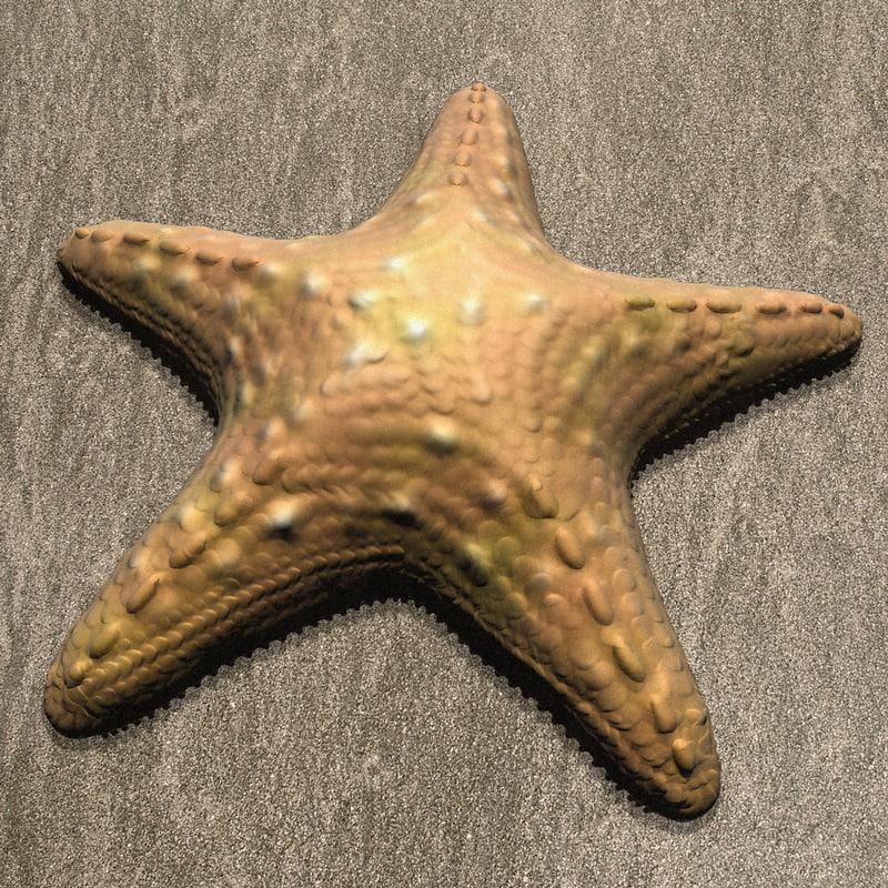 starFish04.jpg