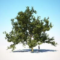 HQ-Vegetation - Plane Tree 1