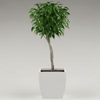 3d model plant flowerpot