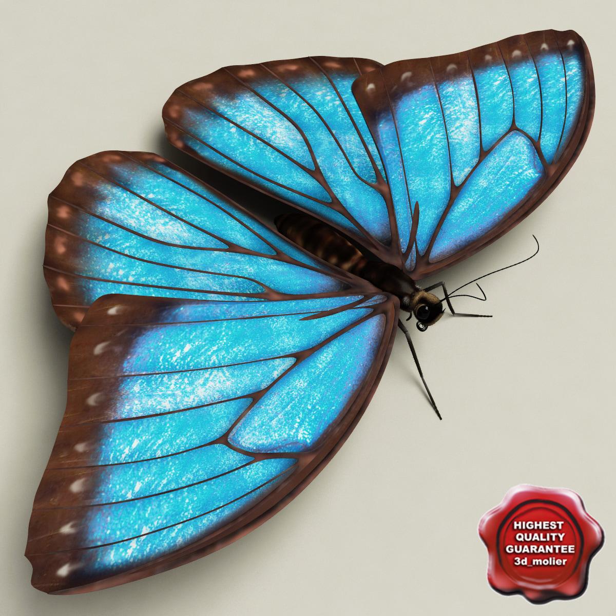 Blue_Morpho_Butterfly_Pose5_00.jpg