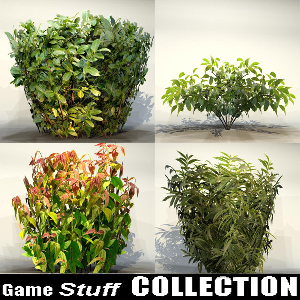 Collection _bush_07.jpg