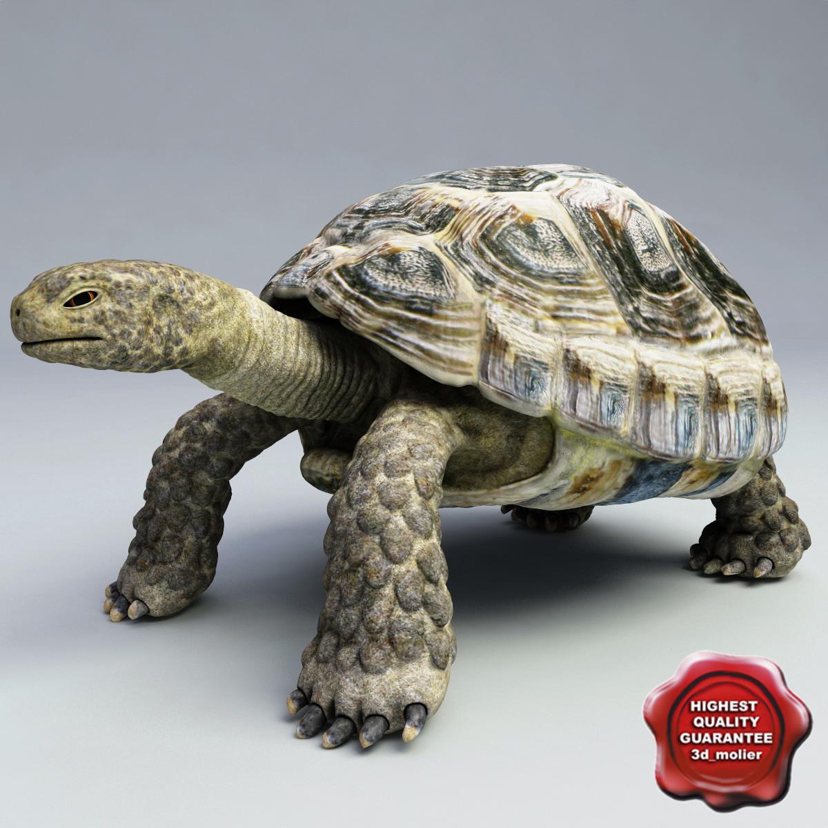 Turtle_Testudines_00.jpg